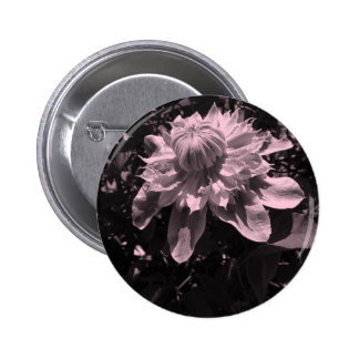 Pink flowers. Clematis. Stylish design. Pinback Button