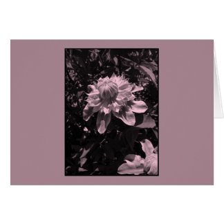 Pink flowers. Clematis. Stylish design. Greeting Card