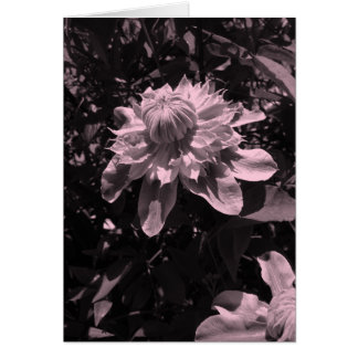 Pink flowers. Clematis. Stylish design. Stationery Note Card