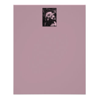 Pink flowers. Clematis. Stylish design. Flyer