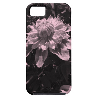 Pink flowers. Clematis. Stylish design. iPhone 5 Covers