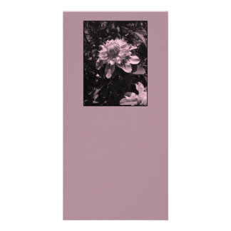 Pink flowers. Clematis. Stylish design. Customized Photo Card