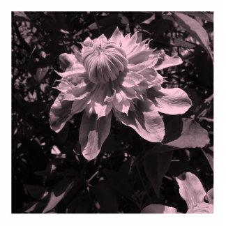 Pink flowers. Clematis. Stylish design. Photo Sculptures