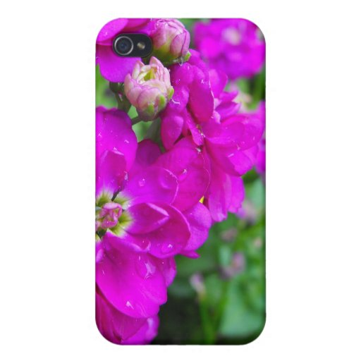 pink flowers, green leaves, initials iPhone 4/4S covers