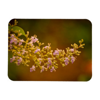 Pink Flowers in Bloom Rectangle Magnets