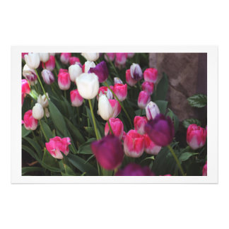 Pink Flowers in Spring Art Photo