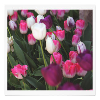 Pink Flowers in Spring Photographic Print
