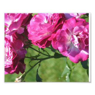 Pink Flowers Photo Print