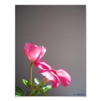Pink Flowers Photo Print