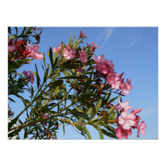 Pink flowers projected on blue sky poster
