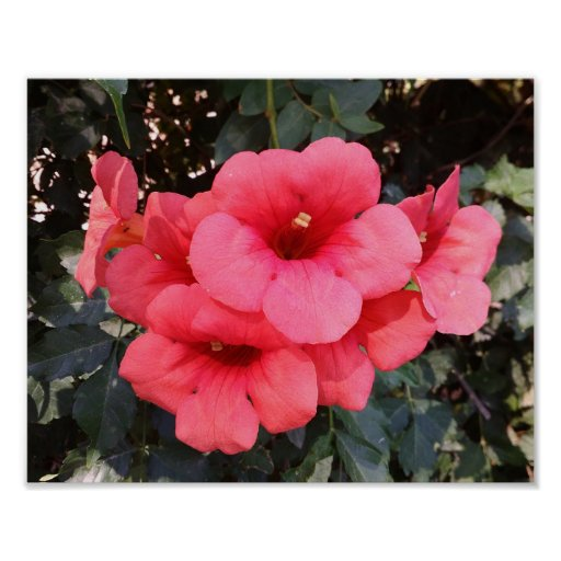 Pink Flowers Value Poster Paper