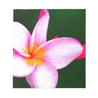 Pink Frangipani Notepad