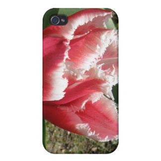 Pink Fringed Tulip  Case For The iPhone 4