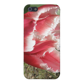 Pink Fringed Tulip  Case For The iPhone 5