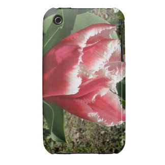 Pink Fringed Tulip iPhone 3 Case