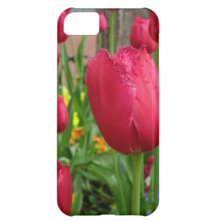 Pink Fringed Tulip iPhone 5C Cover
