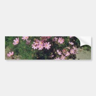 Pink Garden Cosmos (Cosmos Bipinnatus) flowers Bumper Sticker