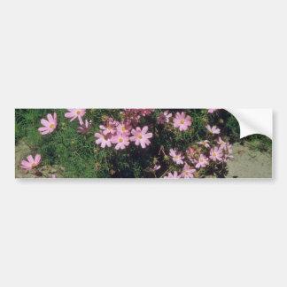 Pink Garden Cosmos (Cosmos Bipinnatus) flowers Car Bumper Sticker