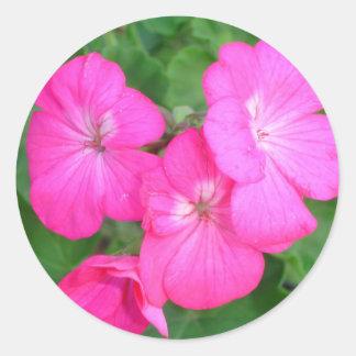Pink Geraniums Sticker