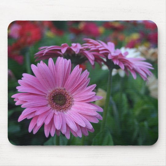 Pink Gerber Daisies colourful mousepad gift idea