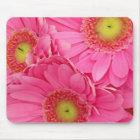 Pink Gerber Daisies Mouse Mat