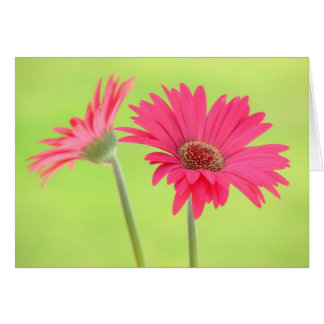 Pink Gerber Daisies on Green Greeting Card