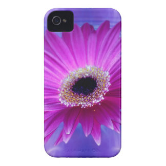 Pink Gerber Daisy iPhone 4 Cover
