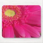 Pink Gerber Daisy Mouse Mats