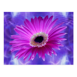 Pink Gerber Daisy Postcards