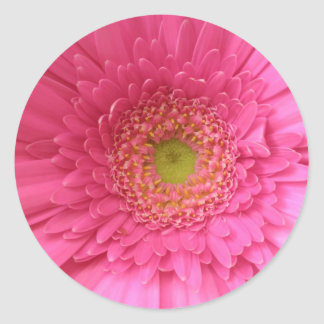 Pink Gerber Daisy Sticker