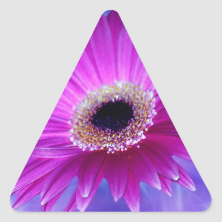 Pink Gerber Daisy Triangle Stickers