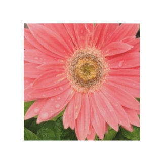Pink Gerber Daisy Wood Canvas