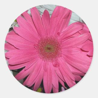Pink gerber sticker