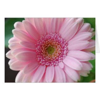 Pink Gerbera Card