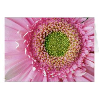 Pink Gerbera Cards