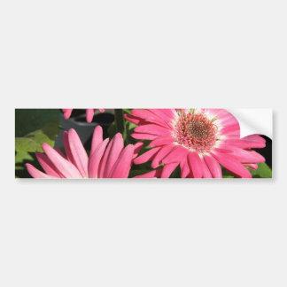 Pink Gerbera Daisy Car Bumper Sticker