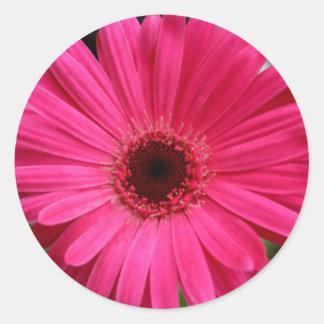 Pink Gerbera Daisy Classic Round Sticker