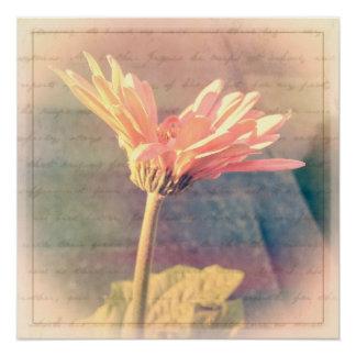 Pink Gerbera Daisy Collage