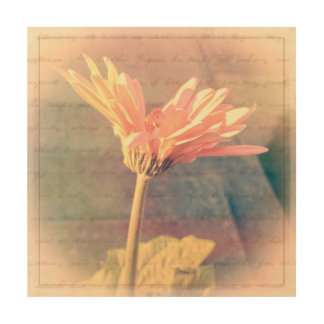 Pink Gerbera Daisy Collage Wood Canvases