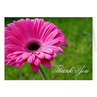 Pink Gerbera Daisy Flower Thank You Greeting Card