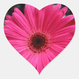 Pink Gerbera Daisy Heart Heart Sticker