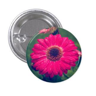 Pink Gerbera Daisy in Bloom 3 Cm Round Badge