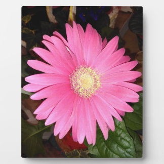 Pink Gerbera Daisy Plaque