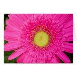 Pink Gerbera Daisy Stationery Note Card