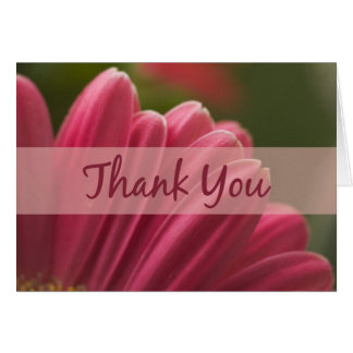 Pink Gerbera Daisy Thank You Cards