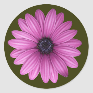 Pink Gerbera flower Classic Round Sticker