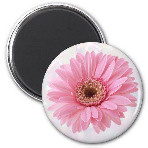 Pink Gerbera fridge Magnet