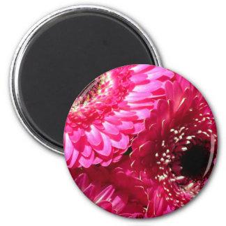 Pink Gerberas 6 Cm Round Magnet
