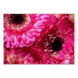 Pink Gerberas Cards