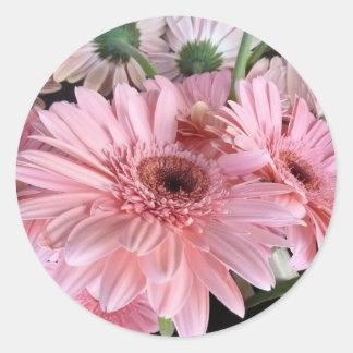 pink gerberas classic round sticker